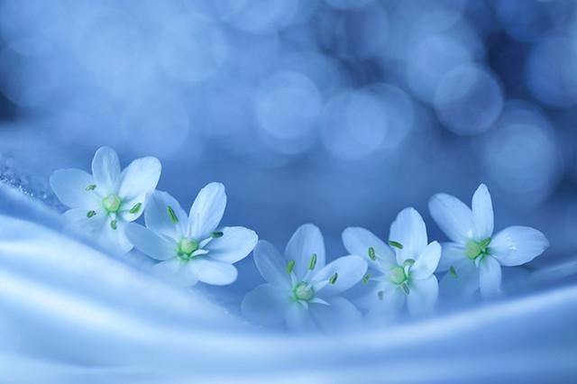 查找带花的微信头像